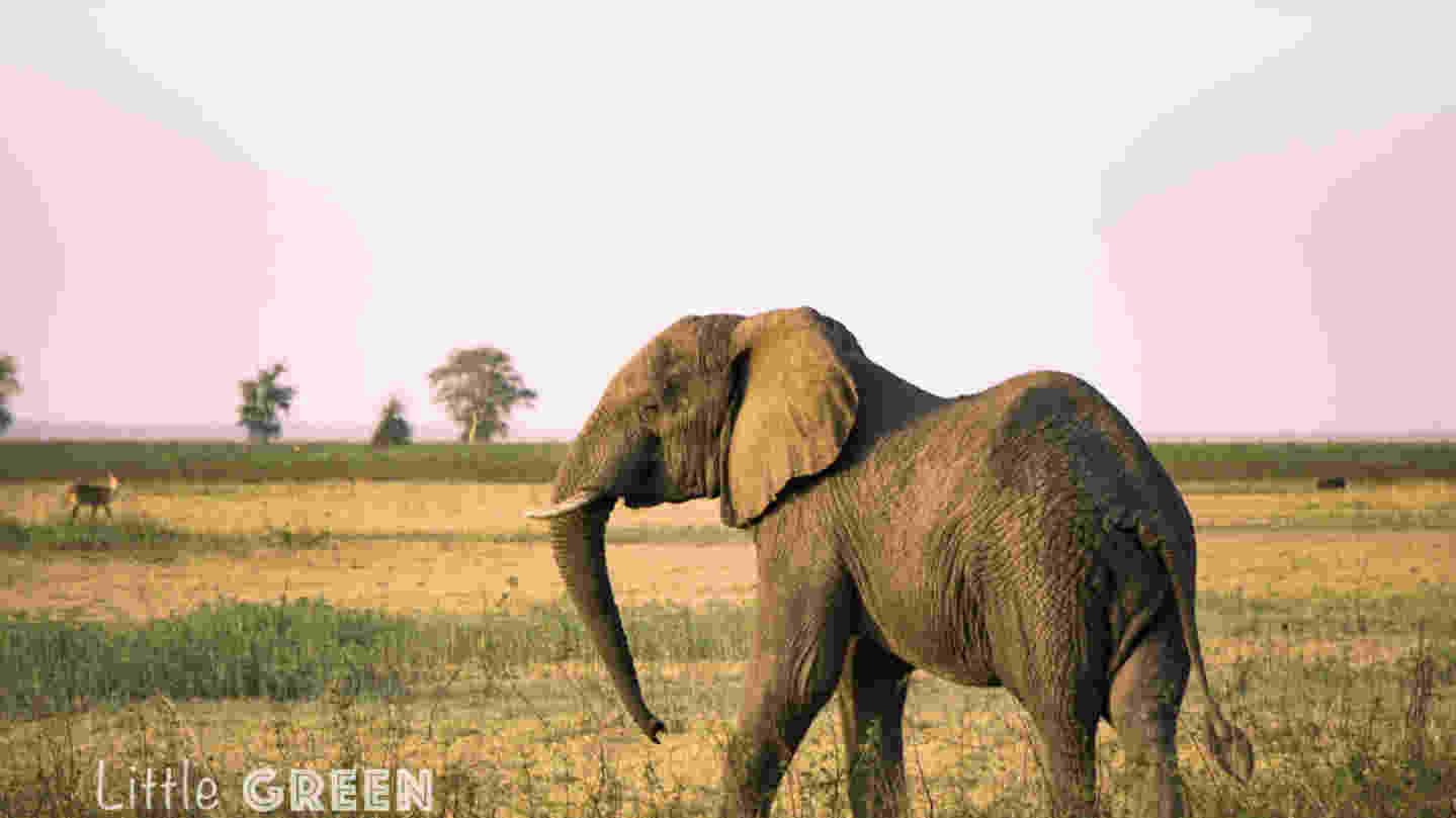Elephant-Gorongosa-Mozambique