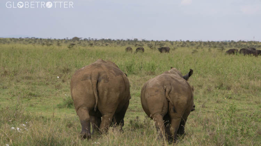 Nairobi-National-Park-mum-and-baby-white-rhino