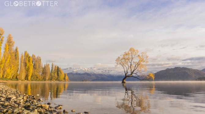Kiwi slang That Wanaka Tree in Autumn